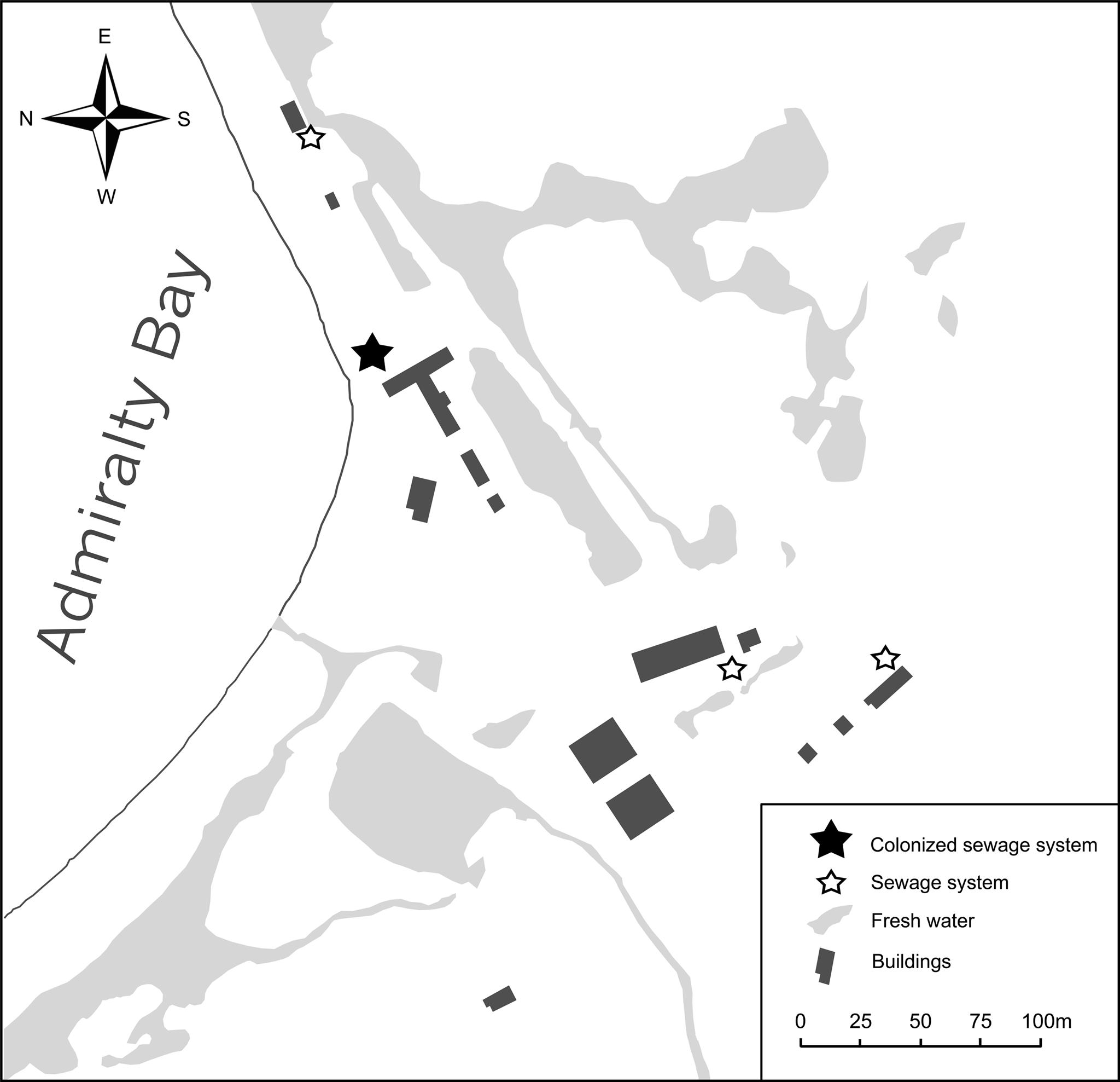 Trichocera maculipennis (Diptera)—an invasive species in Maritime