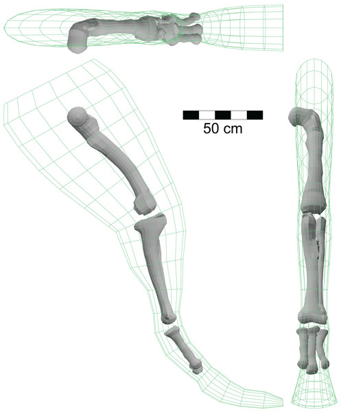 Isometric views of hindlimb model of A. fragilis using the right limb from Fig. 1C and three-dimensional models of the large limb bones based on illustrations in Madsen (1976).