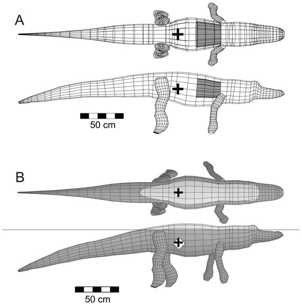 Three-dimensional alligator (Alligator mississippiensis) model as a validation of the methods.