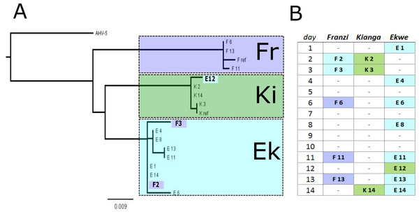 Phylogenetic relationships among detected EHV viruses.