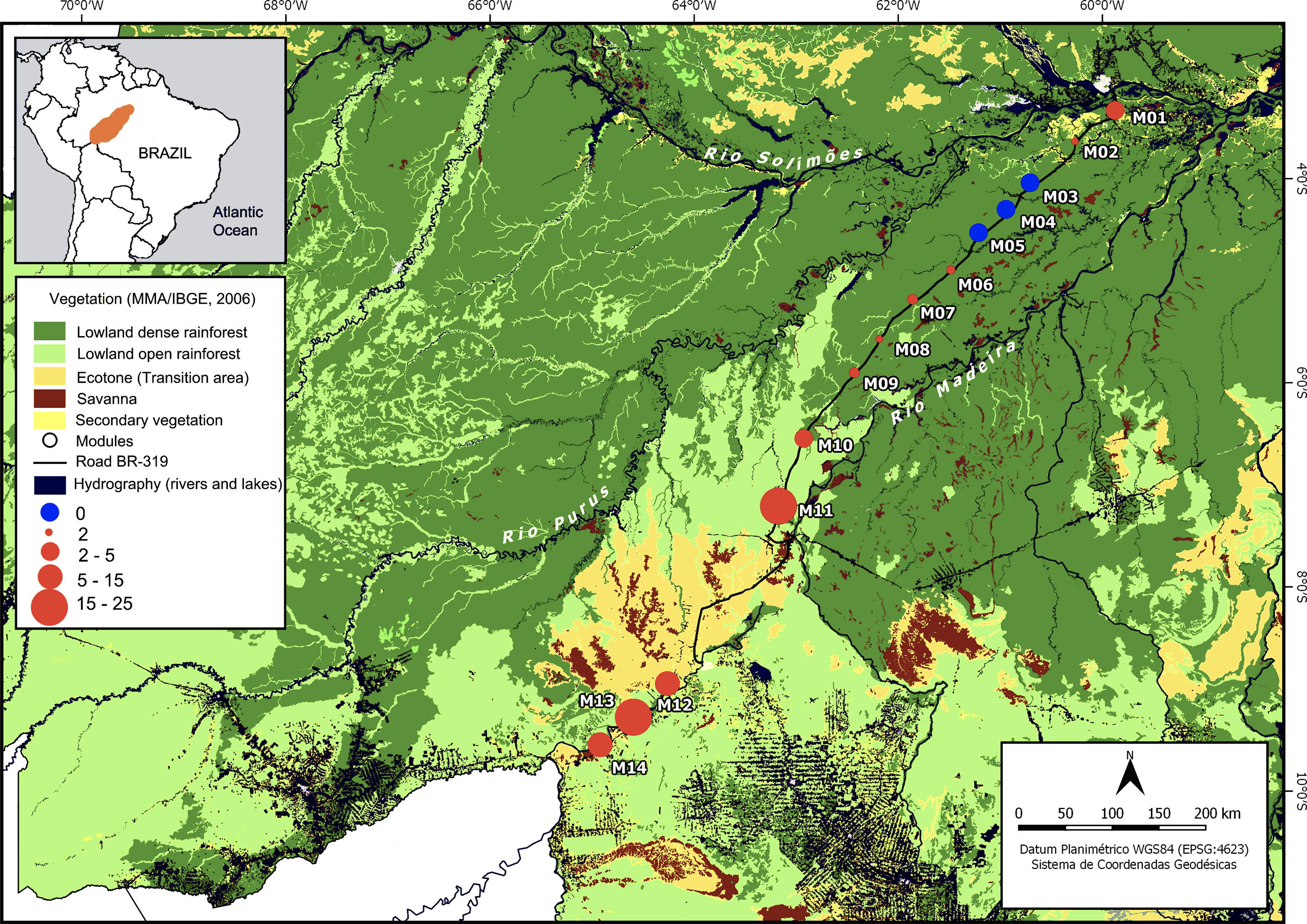 Soil and forest structure predicts large-scale patterns of