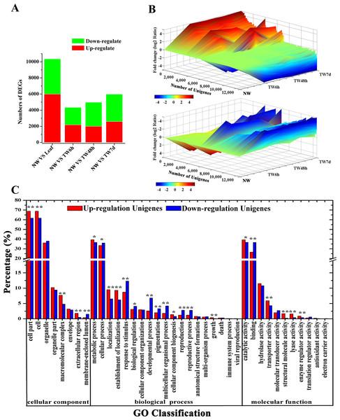 Unigene expression profiles during TW formation of B. luminifera.