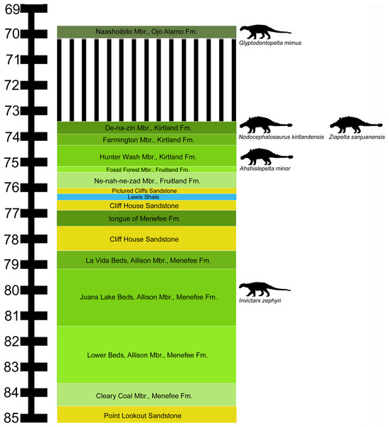 Stratigraphic occurrences of Invictarx zephyri and other ankylosaurs from the San Juan Basin.