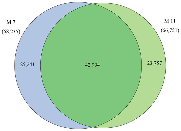 Venn diagram of the statistics of genes expressed in M7 and M11.