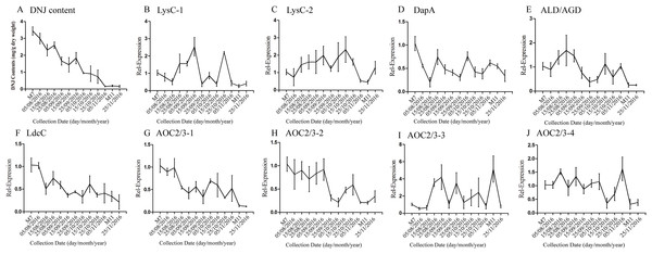Expression analyses of candidate transcripts related to DNJ biosynthesis at different developmental stages by qRT-PCR.