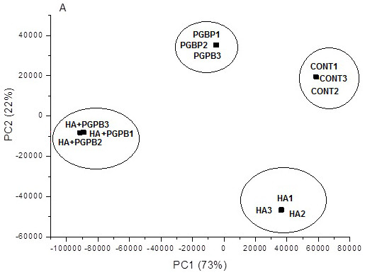 PCA scores for CG-MS metabolic profile data.