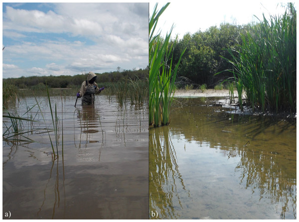 (A) Flooding in PAD 4 (Mamawi Creek Pond) in June 2014 due to an ice jam on the Peace River, and (B) subsequent drying of PAD 4 by August 2014.