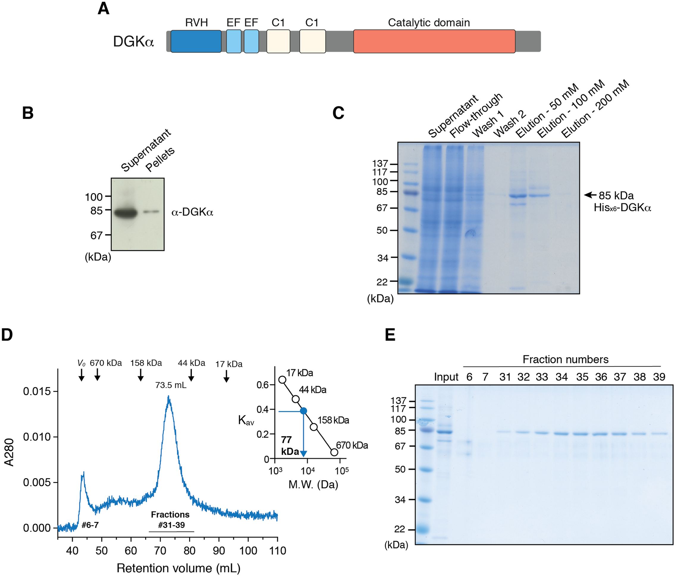 Expression and purification of human diacylglycerol kinase α