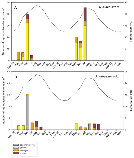 Abundance of the different reproductive structures per unit area in sponge sections during the study period.