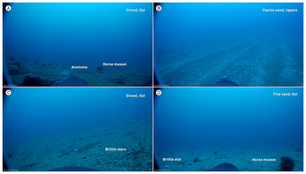 Types of benthic habitat utilized by a yellow-eyed penguin fitted with wide-angle, full HD camera logger.