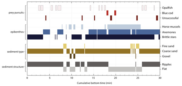 Timeline of a yellow-eyed penguin's prey pursuit events in relation to benthic features, i.e., composition of epibenthic community, sediment type and structure.