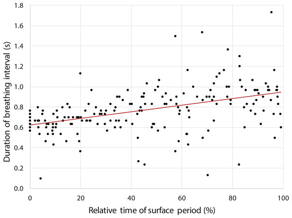 Increasing duration of breathing intervals (n=193) during the surface period after 12 randomly selected dives performed by a yellow-eyed penguin.