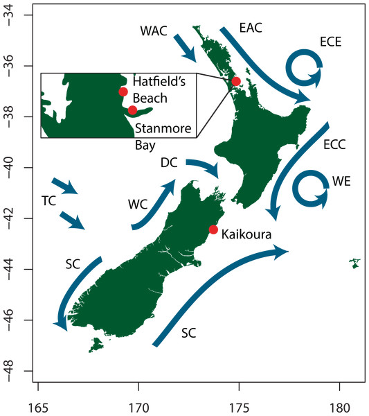 Map showing sampling locations and the major ocean current systems around the New Zealand coast. Adapted from Heath (1985).