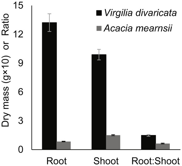 Root and shoot dry masses, and root:shoot ratios of Virgilia divaricata (N = 96) and Acacia mearnsii (N = 110) seedlings harvested three months after the planting of seeds.