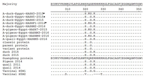 Deduced amino acid sequences of the HA protein of our isolates (isolates from farms are marked by an asterisk) in comparison to parent (A/chicken/Egypt/06207-NLQP/2006), classic (A/chicken/Egypt/NLQP-0918/2009), variant (A/chicken/Egypt/0879/2008), vaccinal H5N1 (A/chicken/Egypt/Q1995D/2010), H5N2 (A/duck/Potsdam/1402-6/1986) strains and latest duck in Sharkia (A/duck/Egypt/1435CAS/2014), latest duck in Egypt (A/duck/Egypt/2/2015), latest pigeon in Sharkia (A/pigeon/Egypt/Sharkia-22/2014) and latest quail strains in Egypt (A/quail/Egypt/14102TCP/2014 and A/quail/Egypt/1171SG/2011).