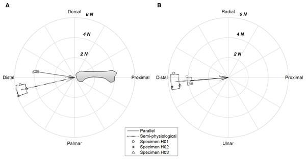 Net force acting on the metacarpal bone.