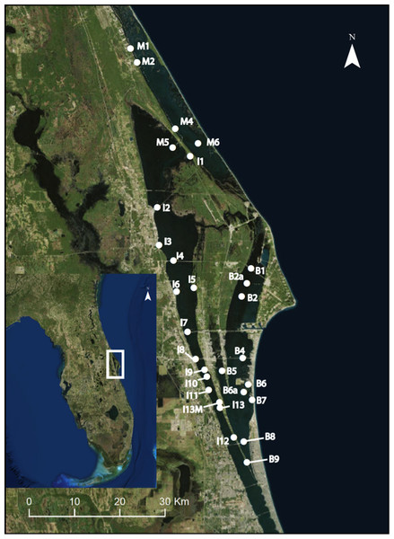 Map of 29 permanent monitoring sites established in the three sublagoons (Banana River [B], Indian River Lagoon [I], and Mosquito Lagoon [M]) of the Northern IRL of central Florida (inset map).
