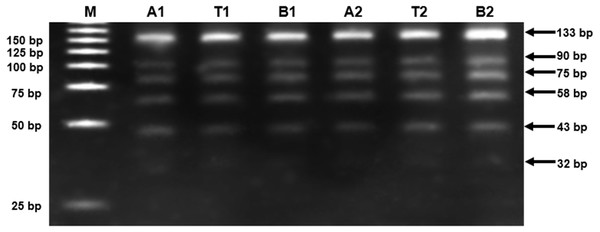 Alu methylation of participants.