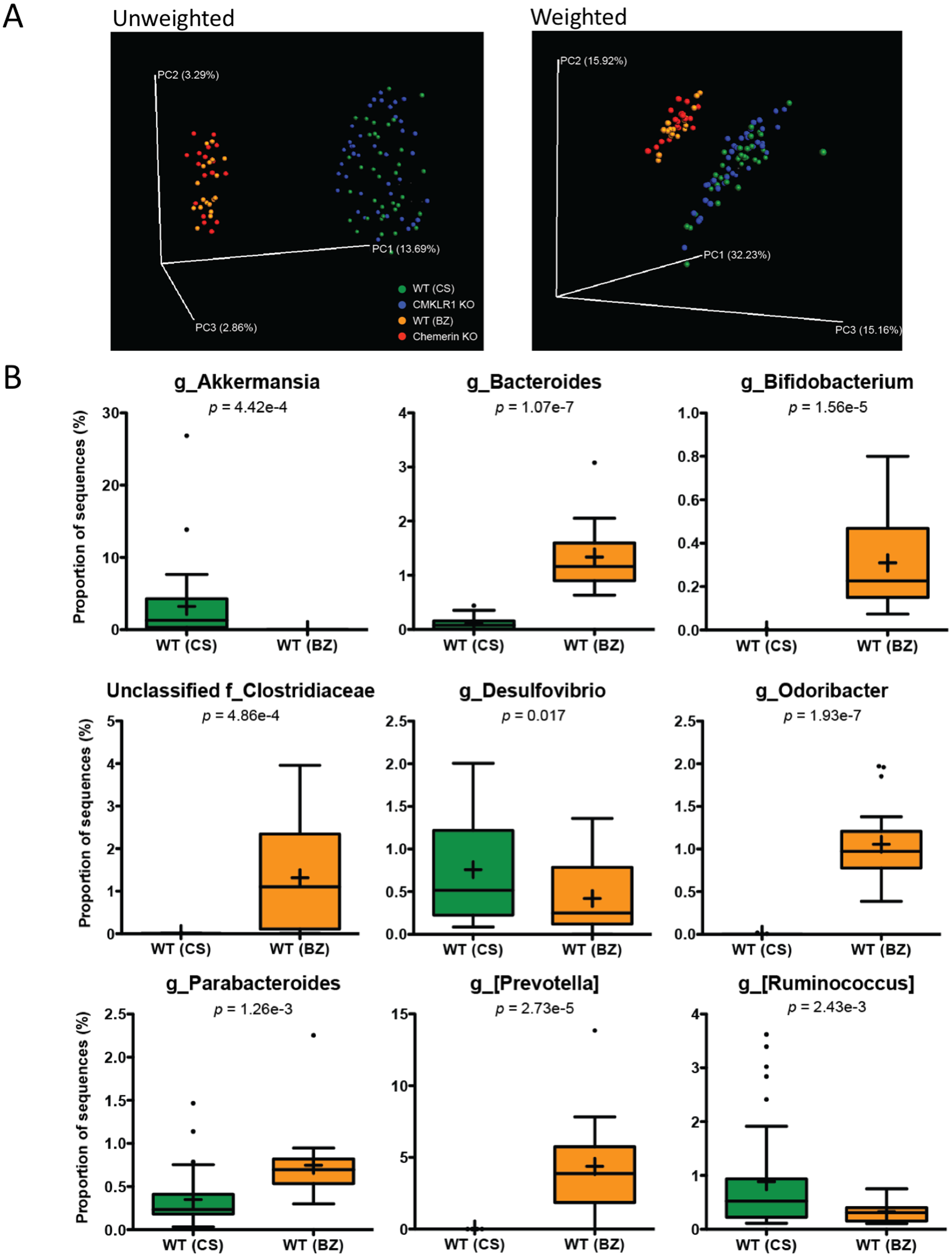 The impact of chemerin or chemokine-like receptor 1 loss on