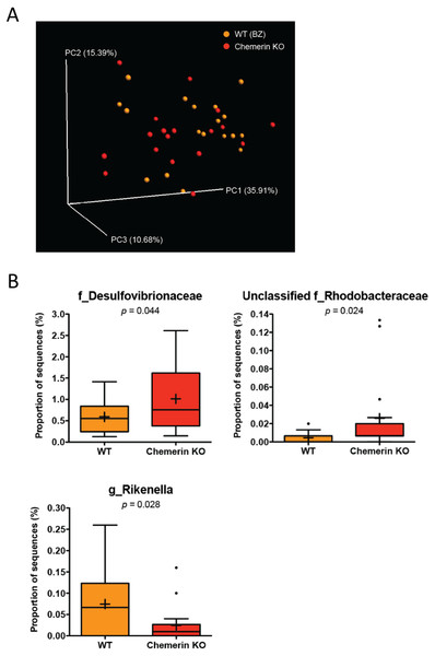 Wildtype and chemerin KO mice exhibit similarities in microbiome composition.