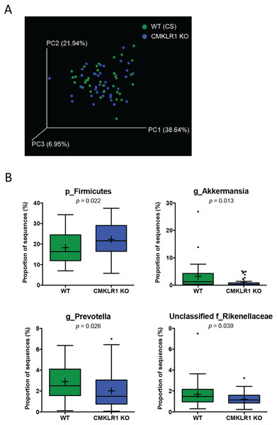 Wildtype and CMKLR1 KO mice exhibit a modest separation in bacterial diversity.