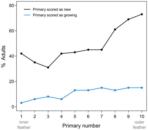 Summary of new and growing primaries from 76 adult Limpkins.