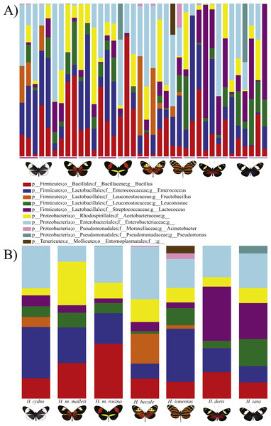 Distribution of Bacterial OTUs across individuals (A) and species (B).