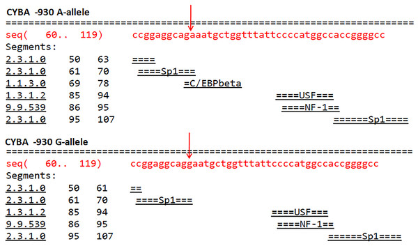 Effect of the CYBA -930 A/G polymorphism on transcription factor binding sites.