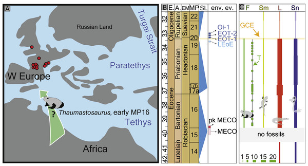 Palaeogeography of Europe with fossil record of the late Eocene–early Oligocene record of herpetofauna