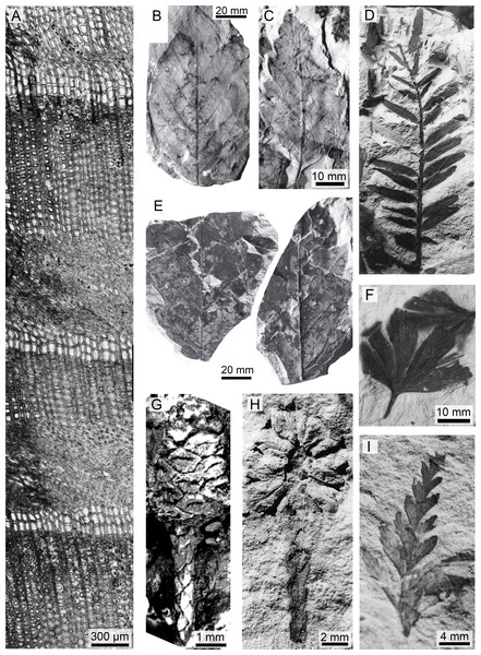A sample of the variety of taxa, organs, and preservation of plant fossils from the Upper Cretaceous portion of the Winton Formation.