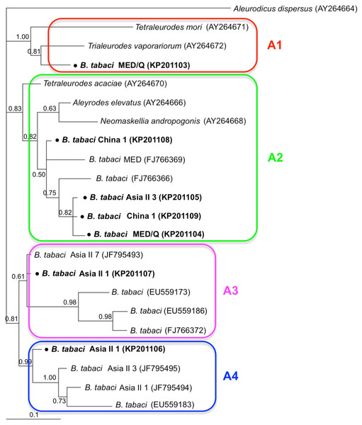 The Bayesian phylogenetic tree of Arsenophonus based on 23S rDNA sequences.
