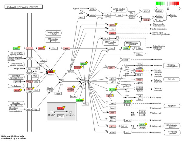 Fetal-adult differentially expressed genes mapped to the 'PI3K-Akt signaling' pathway.