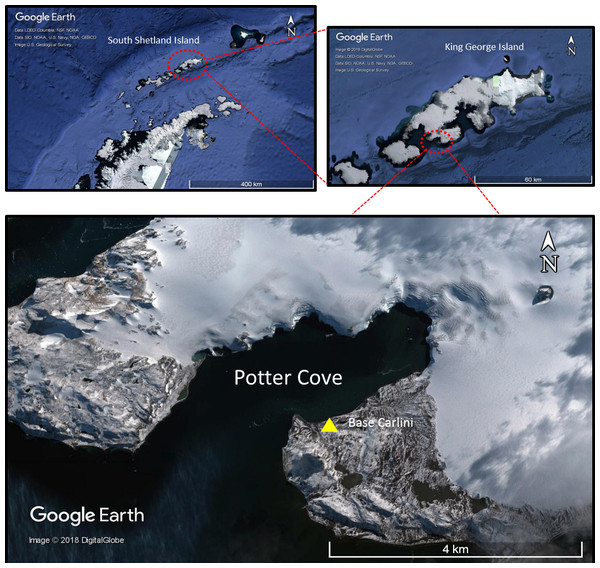 Map of Potter Cove at 25 de Mayo/King George Island.
