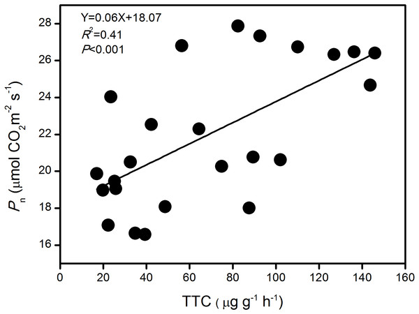 The relationship between photosynthetic rate (Pn) and root activity (TTC) of large-spike wheat lines during the growth period.