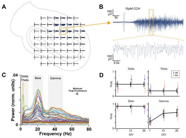 Oscillation analysis of organotypic hippocampal cultures on microelectrode arrays.