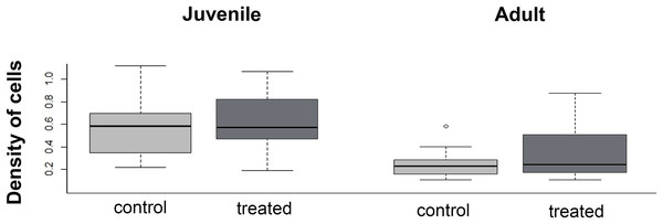 Boxplot of the meniscus cell density in juvenile and adults, in control and treated groups.