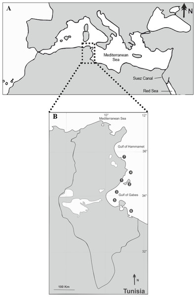 Sampling locations (1–7) of the native S. sphyraena and the invasive Lessepsian migrant S. chrysotaenia in the central Mediterranean Sea (A) along the Tunisian coast (B).