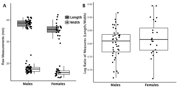 Boxplot of navicular raw length and width measurements by sex (A); Boxplot of navicular index values by sex (B).
