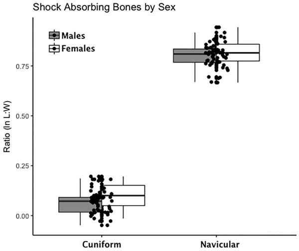 Boxplot of shock-absorbing tarsal variables (navicular, intermediate cuneiform) by sex.