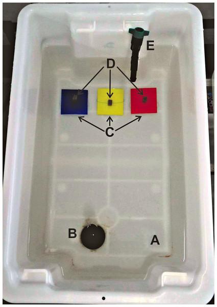 Experimental design of the food/colour choice experiment.