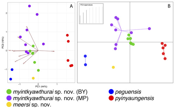 PCA and DAPC analyses of the Cyrtodactylus peguensis group.