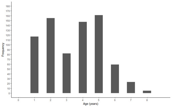 Age frequency of Gulf Corvina from raw data.