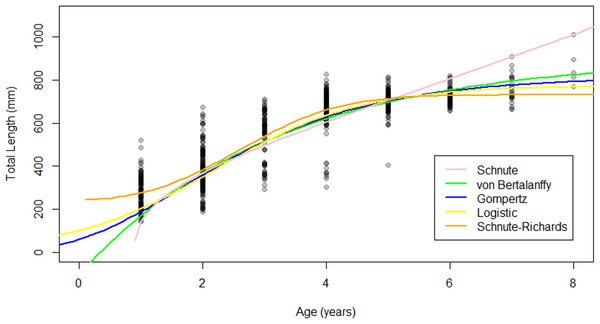Growth models fit to raw age-length data for Gulf Corvina.