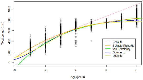 Growth models fit to raw Gulf Corvina age-length data bolstered by simulated values.