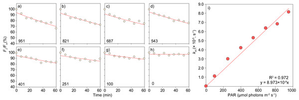 Determination of the rate constant of photoinactivation, kPI, for eight irradiance levels and of the relative quantum yield of PSII photoinactivation, ΦPI, on the green alga Bryopsis hypnoides (experiment 3).