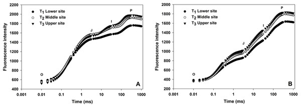 Effect of different sites of soil on the fast fluorescence induction curve (log time scale) of dark-adapted leaves during winter (A) and summer (B) cropping cycle.