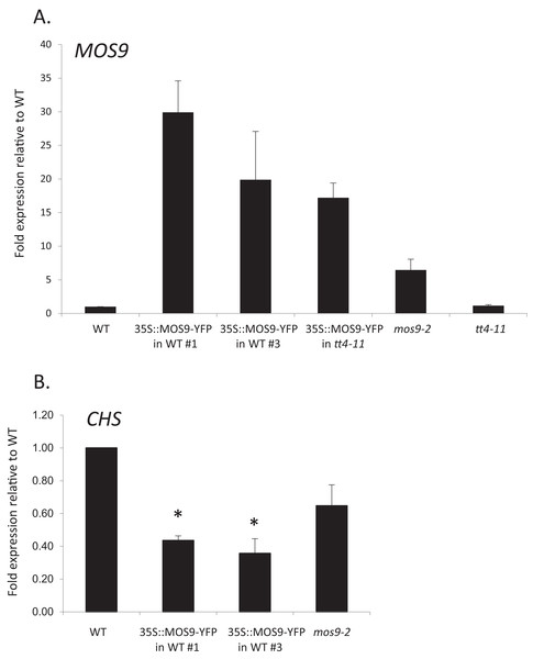 Analysis of MOS9 (A) and CHS (B) expression in roots of 5-day-old MOS9 overexpression lines.