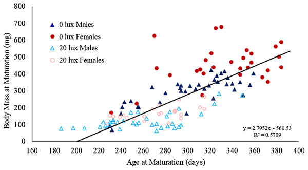 Effect of light treatment and sex on the relationship between body mass and age at maturity.