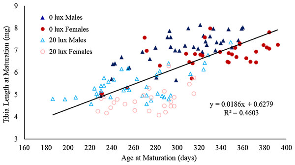 Effect of light treatment and sex on the relationship between tibial length and age at maturity.