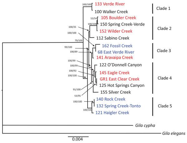 mtDNA phylogenetic reconstruction.